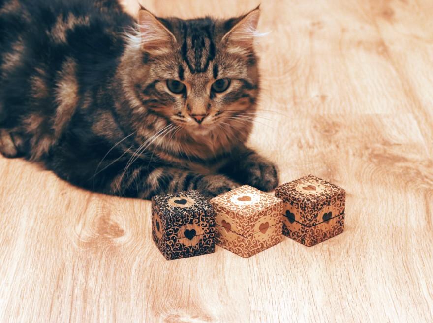 Pässu and boxes. Tauno Erik