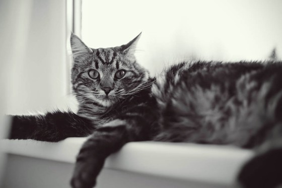 Recently, only cat pictures