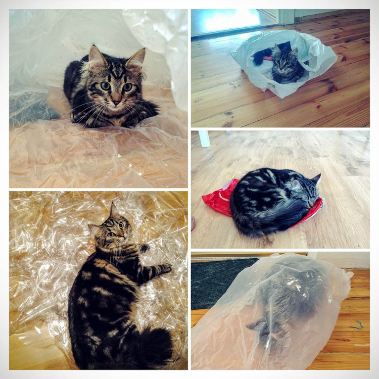 Kitty and plastic bags