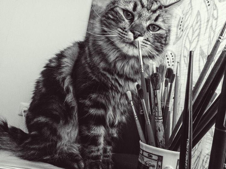 This cat loves brushes!