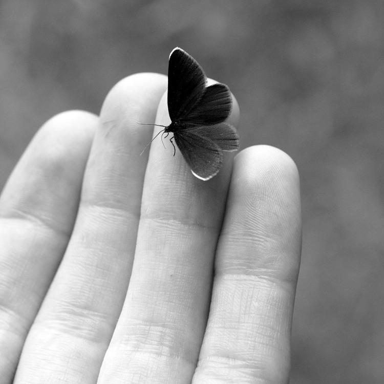 Nõgine liblikas