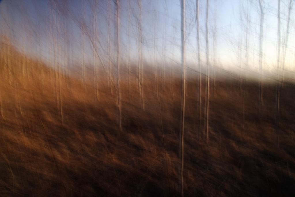 Õrnad puud. Photo Tauno Erik