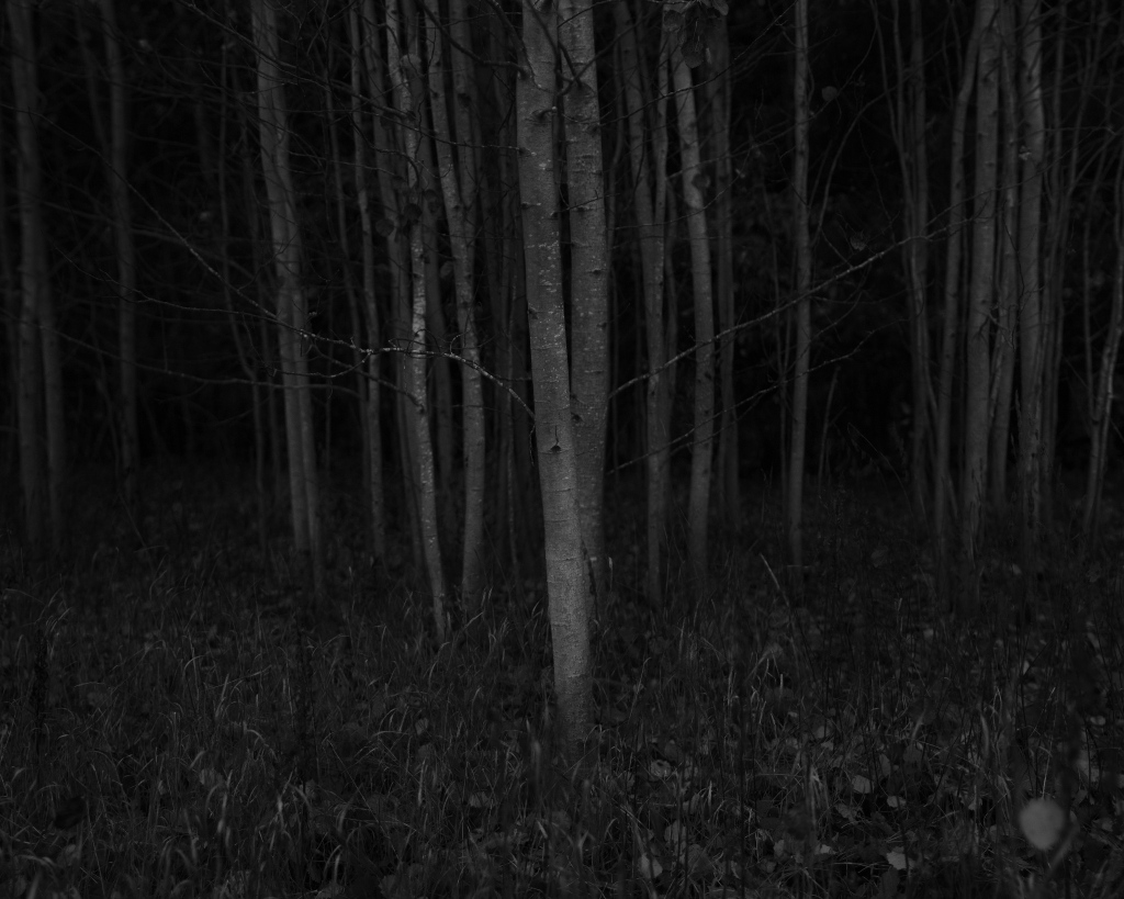 Haavapuud. Photo: Tauno Erik