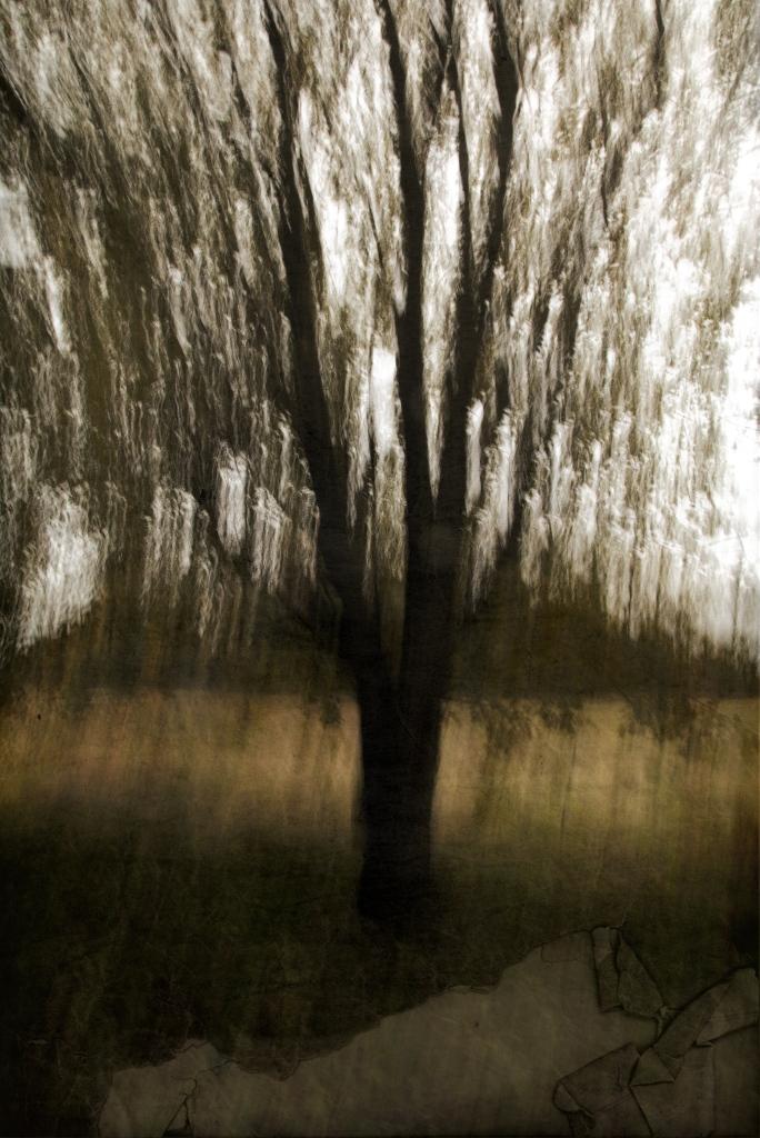 Hingepuu. Photo Tauno Erik
