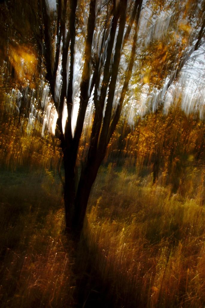 Inglitepuu. Photo Tauno Erik