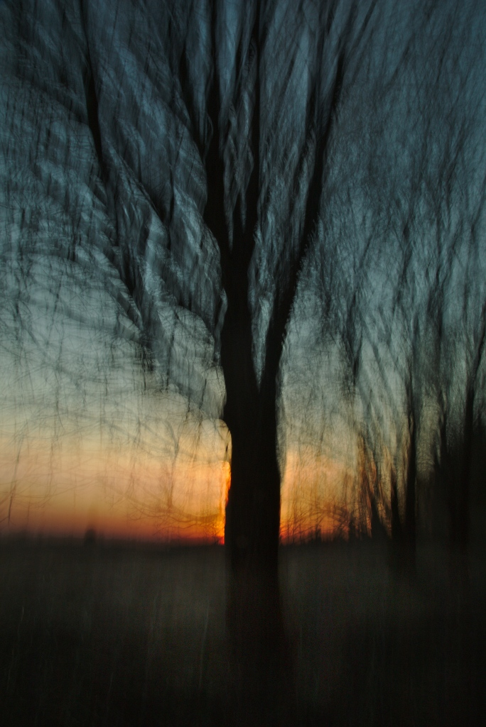Kevadpuu. Photo Tauno Erik