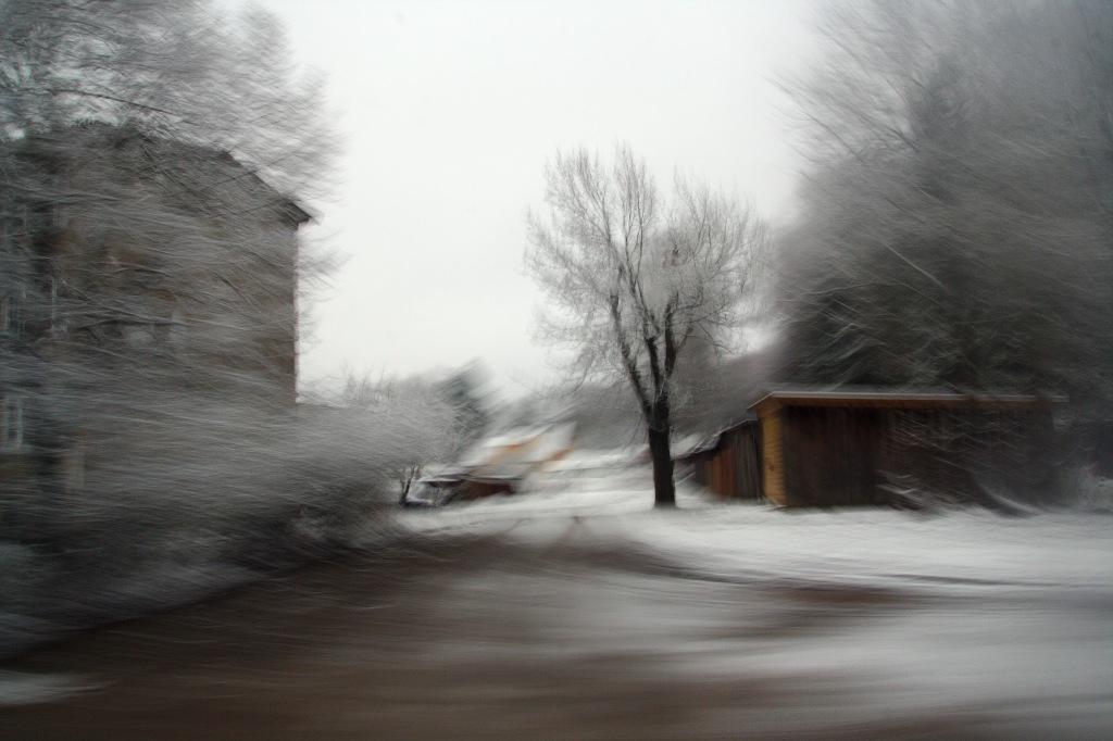 Must puu. Photo: Tauno Erik
