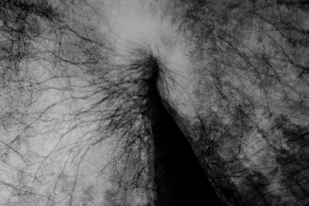 Must puu. Photo Tauno Erik