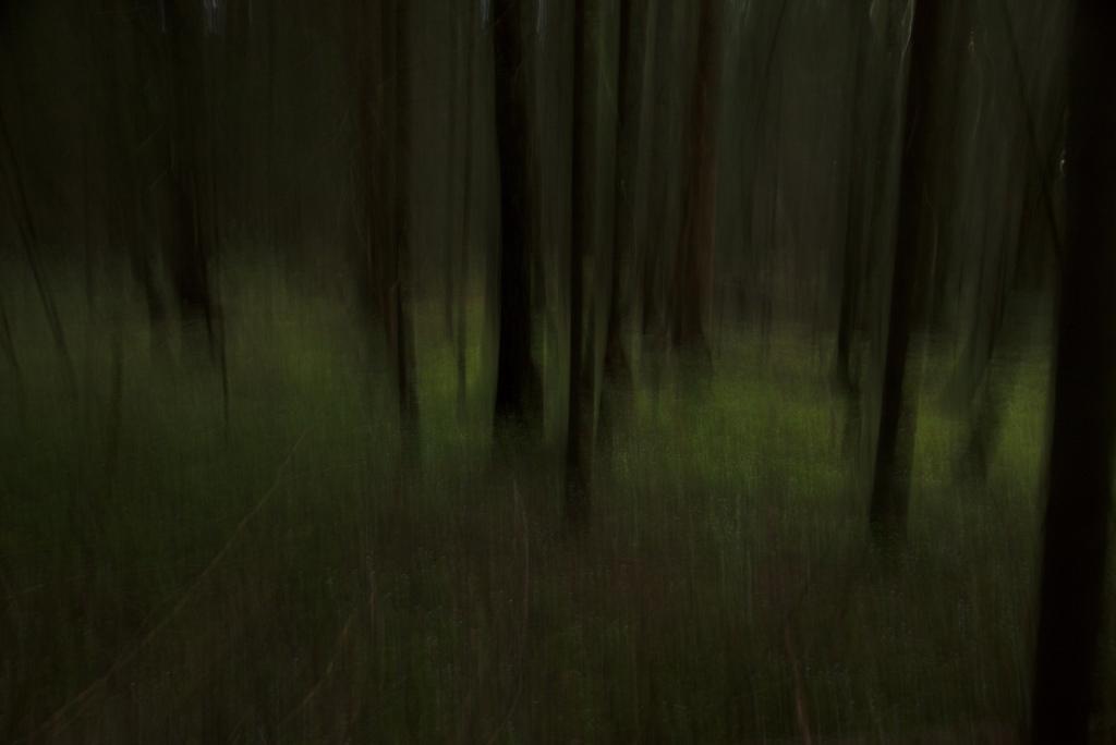 Metsalune. Photo Tauno Erik