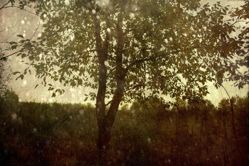 Kaheharuline. Photo Tauno Erik