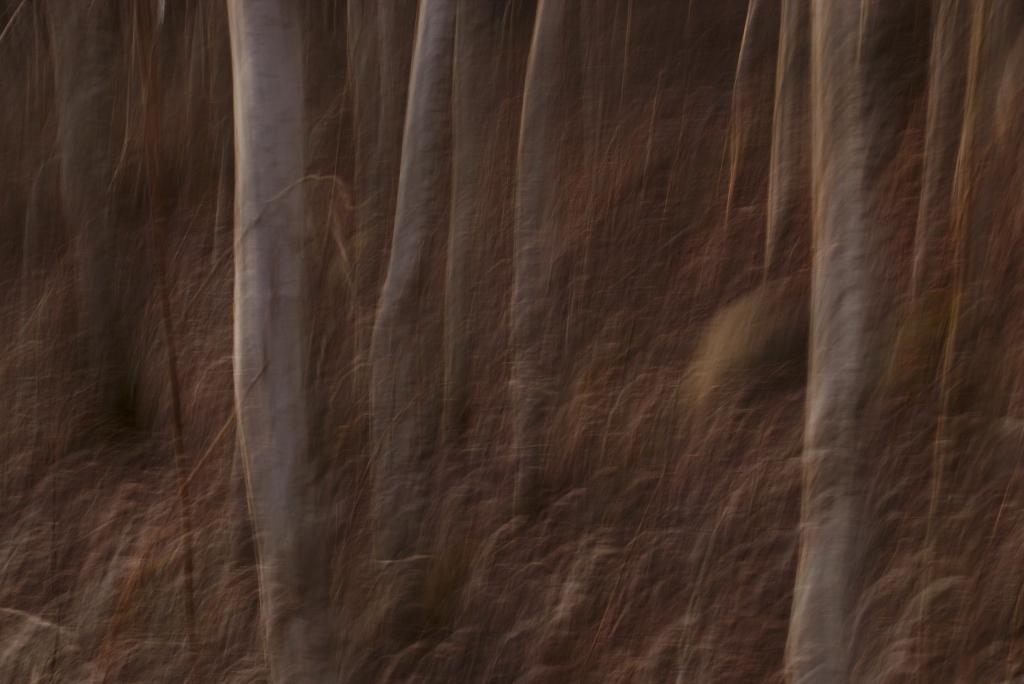 Tekstuur. Photo Tauno Erik