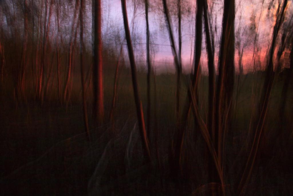 Väänduvad puud. Photo Tauno Erik