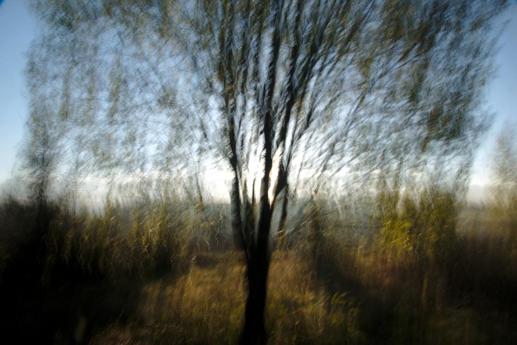 Kevadine. Photo Tauno Erik