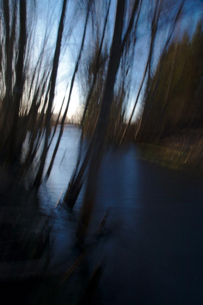 Vesi ja puud. Photo Tauno Erik